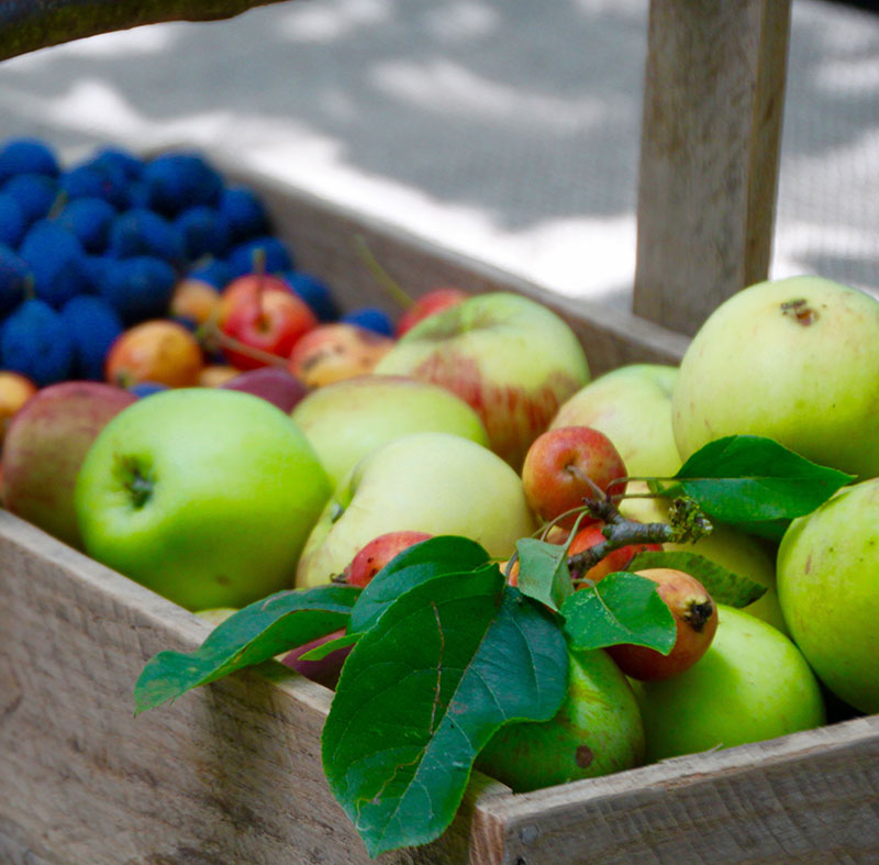 Autumn Fruits at Pink Sink Autumn Scene at Mad Dogs & Vintage Vans Glamping Site